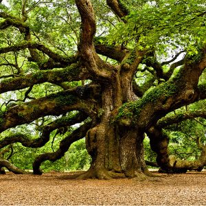 might oak growing in a forest from a single acorn, great ideas come from small things - Solutions for Small Business